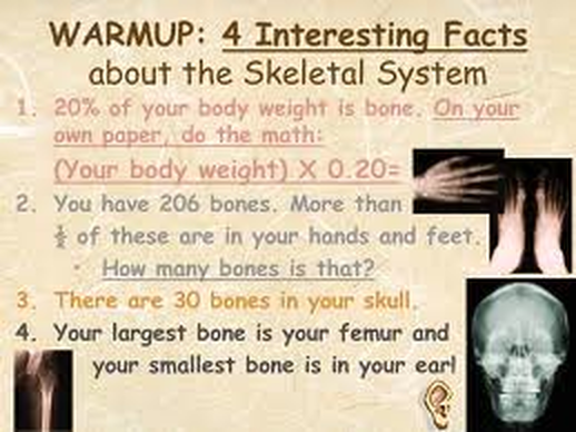 fun facts - musculoskeletal system, Muscles